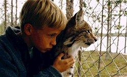 Poika Ja Ilves