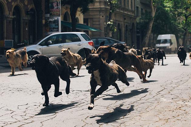 Koirien vallankumous.