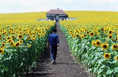 Talo keskellä auringonkukkia. Ja Elijah Wood.