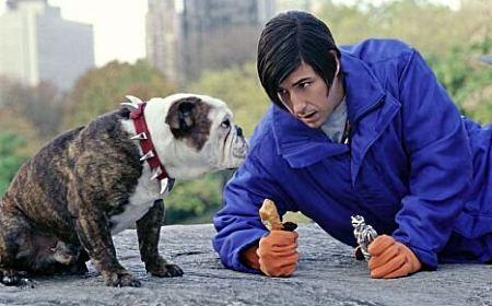Koira ja Adam Sandler
