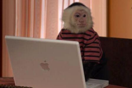 Älykäs apina